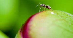 """Overené """"fígle"""" ako sa zbaviť mravcov vdomácnosti"""