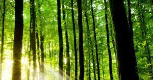 Spríjemnite si pobyt v prírode s dokonalou výbavou